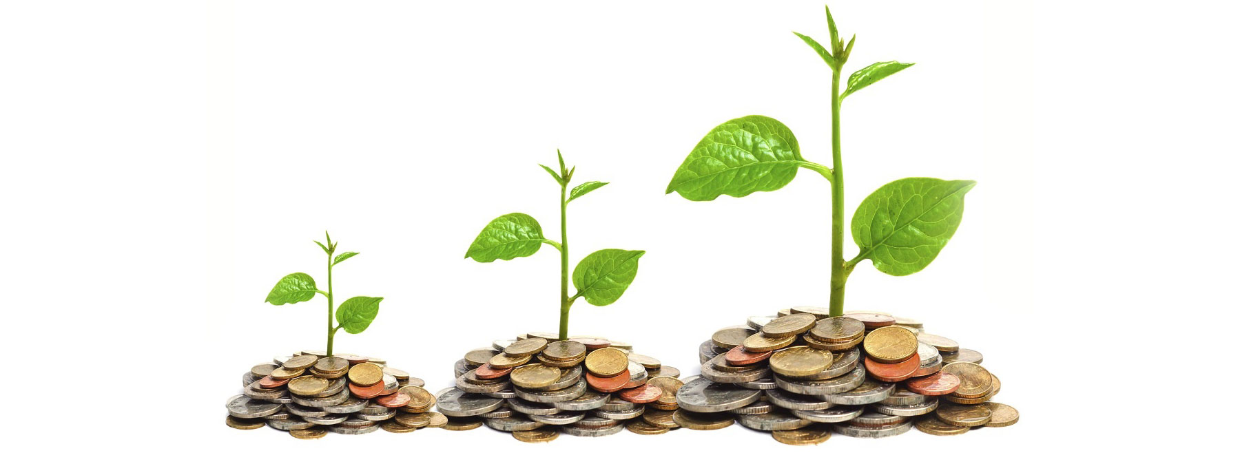 investimento crescita